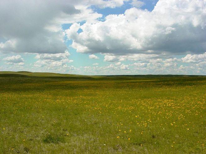 Mixed-grass_Prairie_in_the_Bowdoin_WMD_(13106269445)